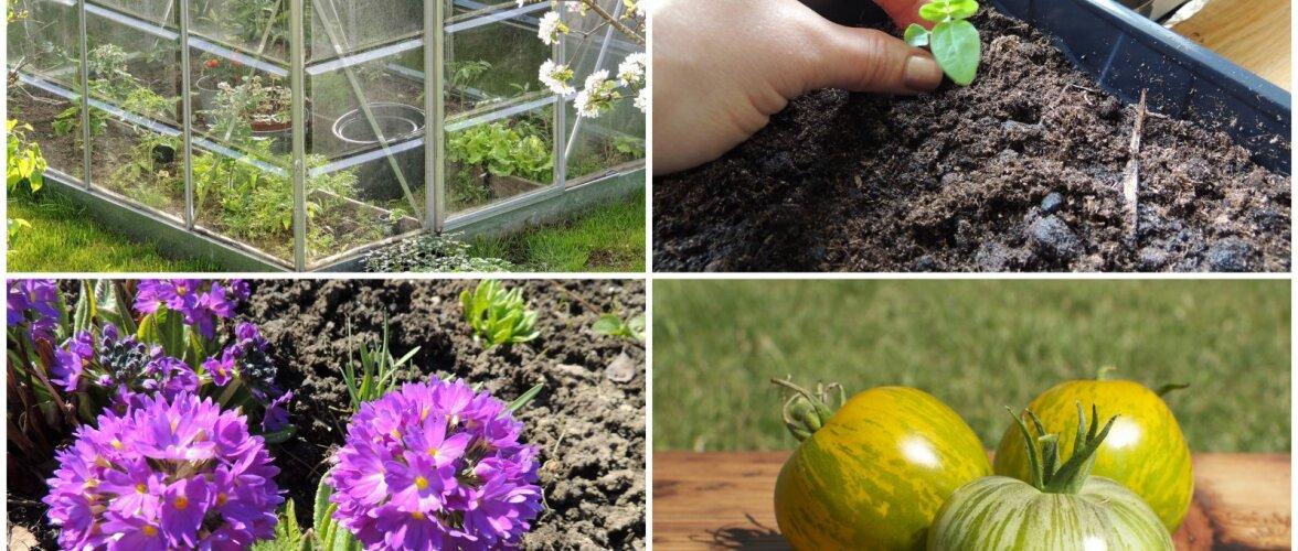 AIAHOOLIK: Udupea tomatimeelespea ja muud kevadised toimetused