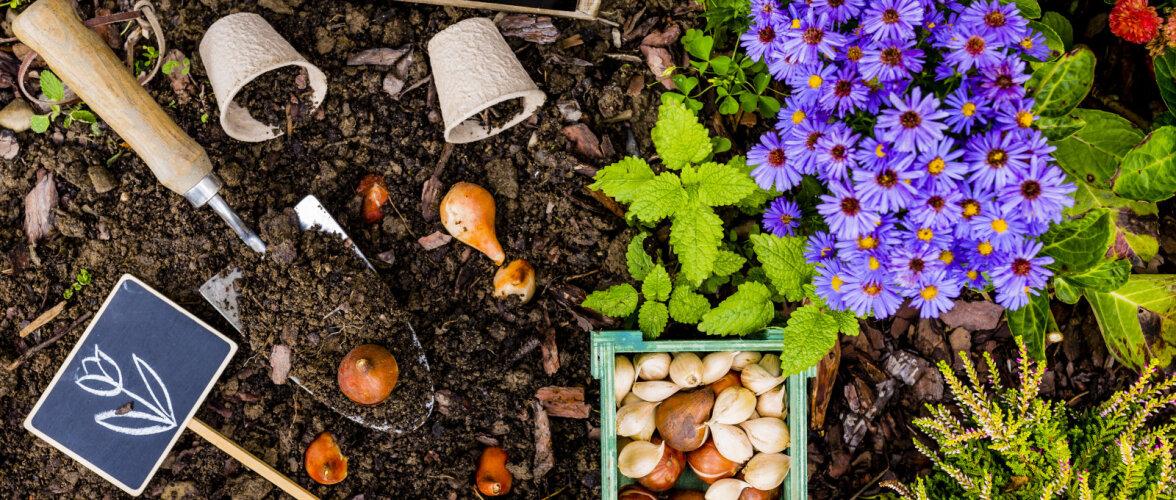 Hilissuvi sobib hästi lillesibulate istutamiseks
