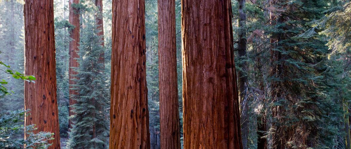 Millised puuliigid sobivad kõige paremini välistöödeks?