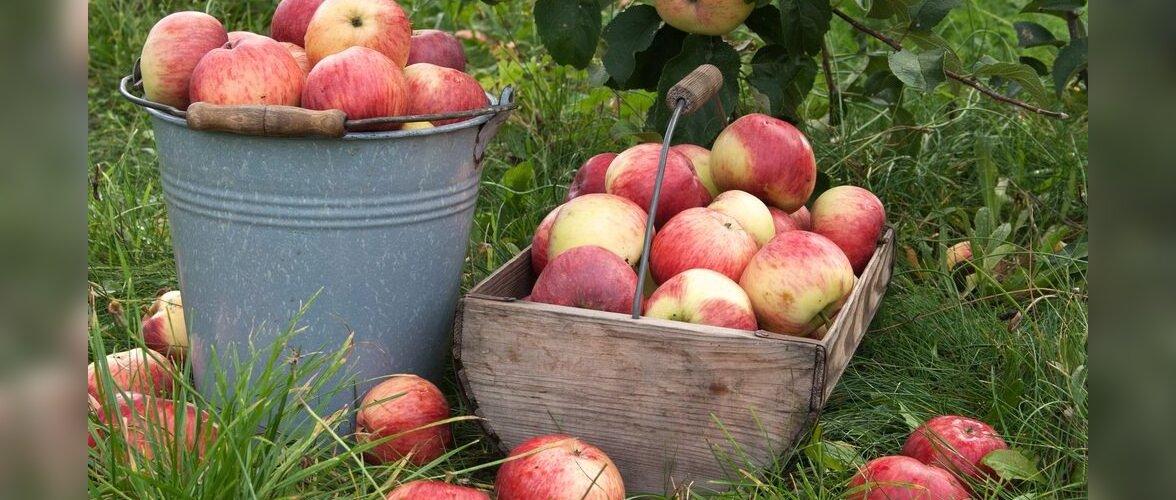 Tervislik mahl oma aiast — lihtsamast lihtsam!