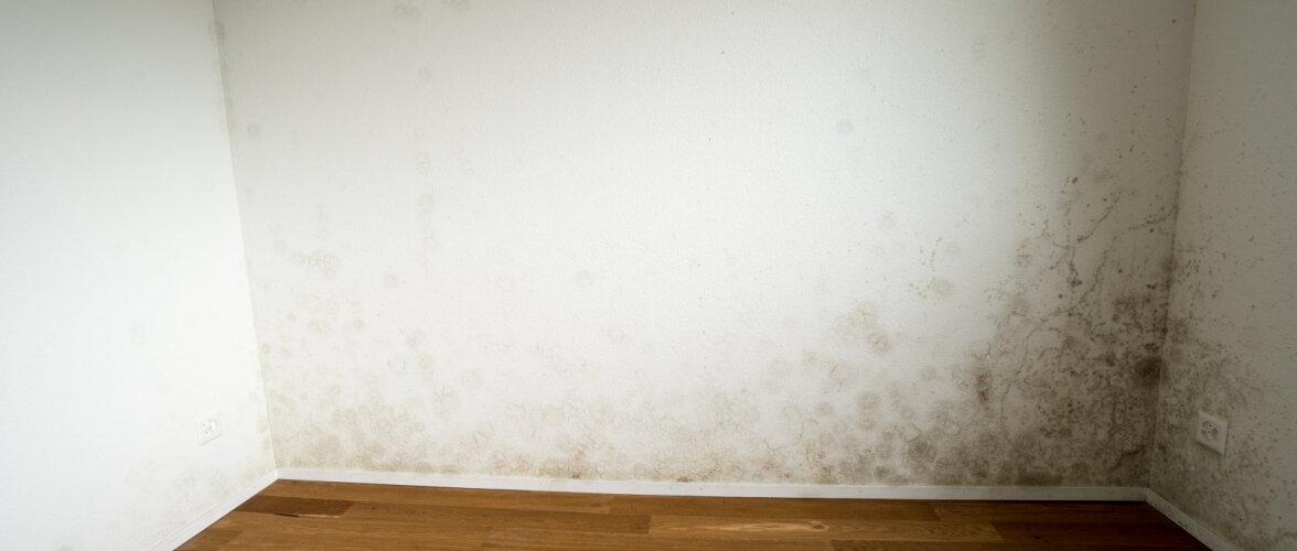 Kuidas vältida seente ja hallituse teket korteris? Õhku saab kuivatada mitmel erineval viisil