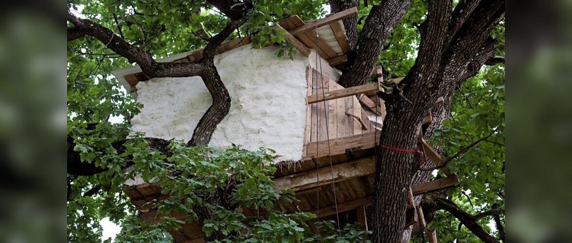 Elamine puu otsas