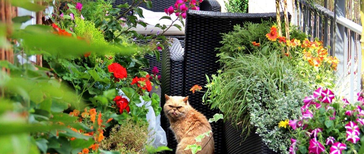 Sisusta rõdu ja terrass roheliseks!