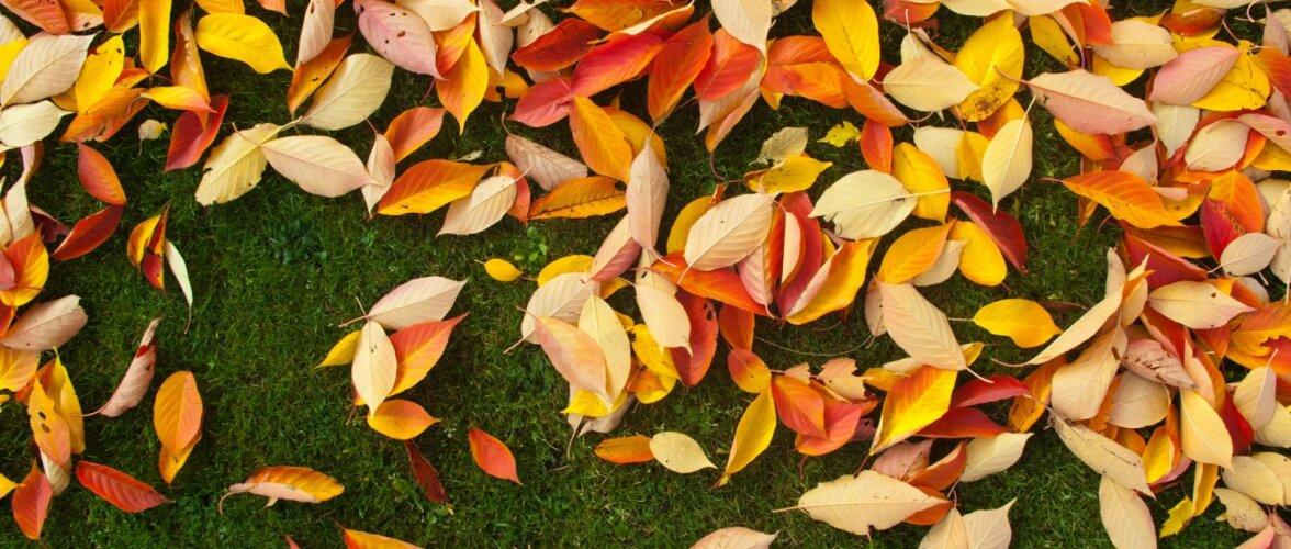 Lehtede riisumine teeb kasu asemel palju kahju — 7 põhjust, miks tasuks lehed koristamata jätta