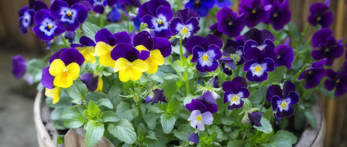 Hooldusvaba aed — kas reaalsus või lihtsalt unistus?