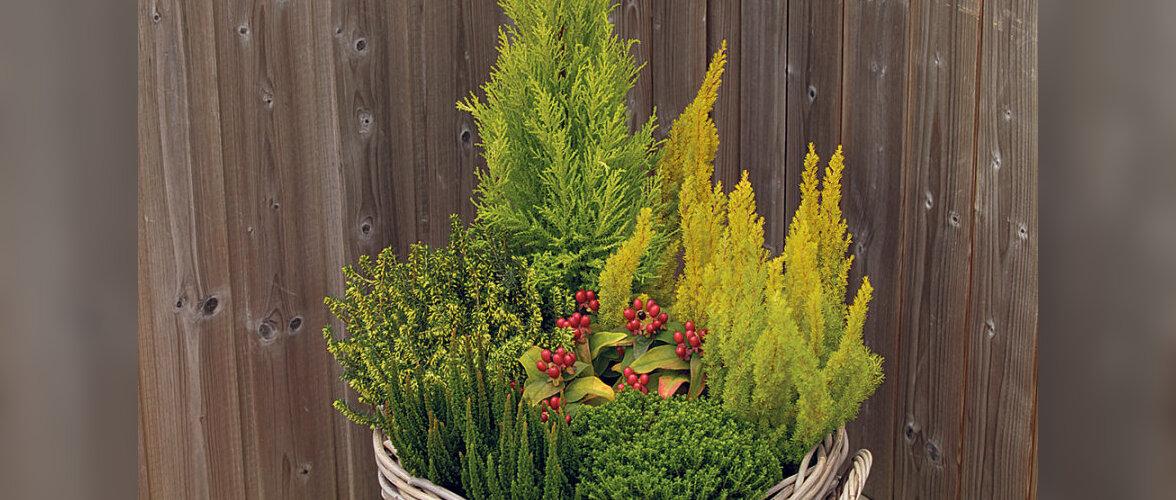 Sügisene aed suures korvis