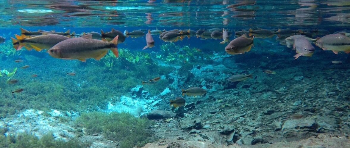 Einestaks hoopis vee all ja vaataks kaladega tõtt? Norras avatakse Euroopa esimene veealune restoran