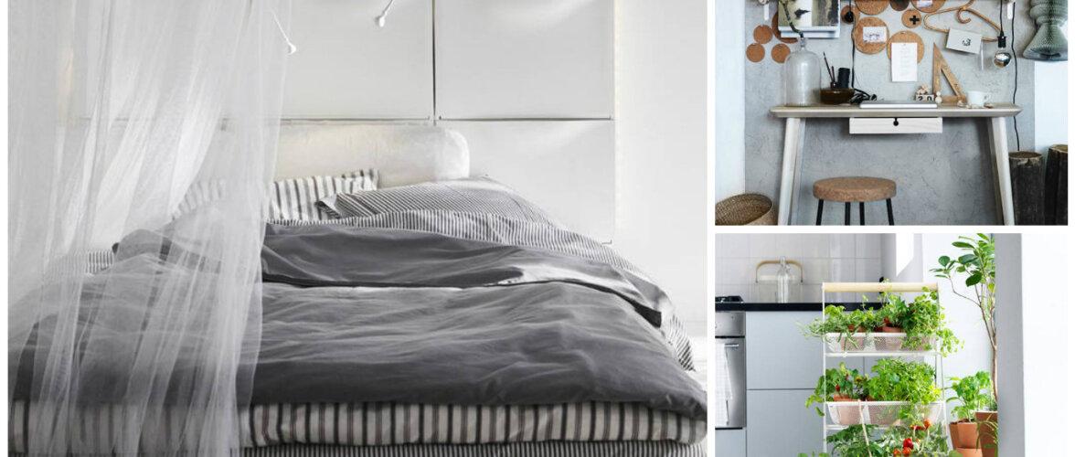 Nutikad ideed, kuidas mööblit teistmoodi kasutada — kingakapist voodipeats ja köögiriiulist botaanikaaed