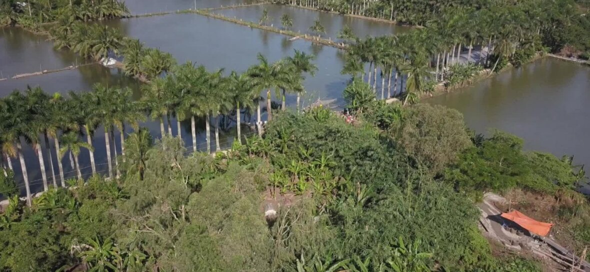 VIDEO | Maaleht ja Delfi uurivad Vietnamis, kas Eestisse jõudev kala on reostunud