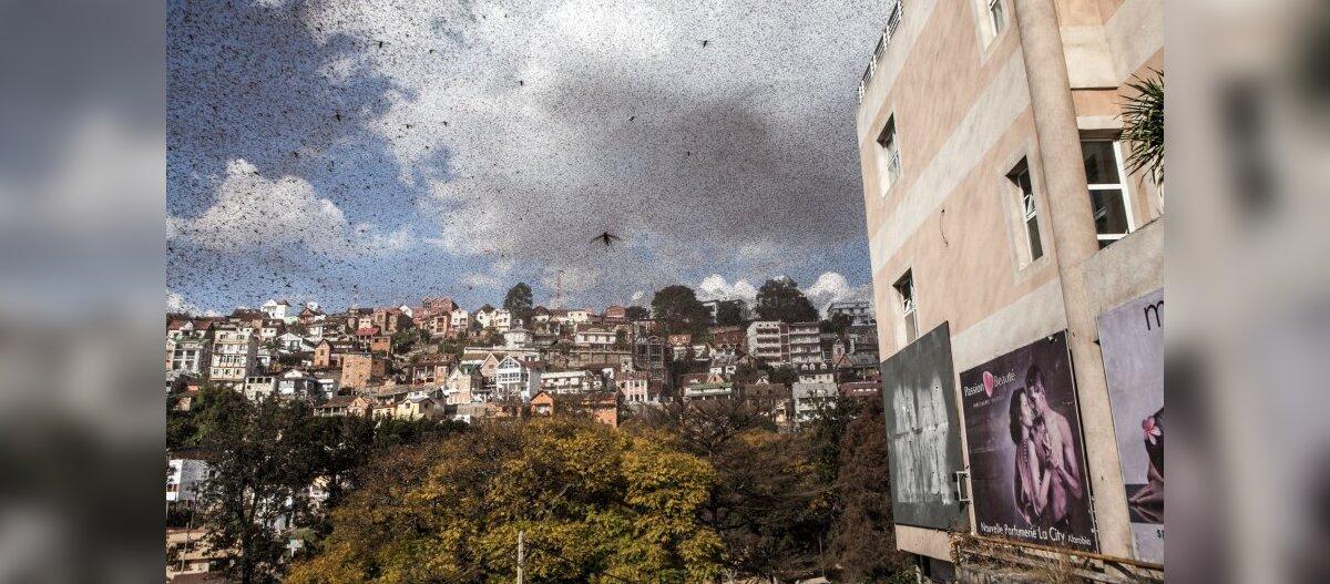 Rändtirtsud peatasid igapäevaelu Madagaskari pealinnas