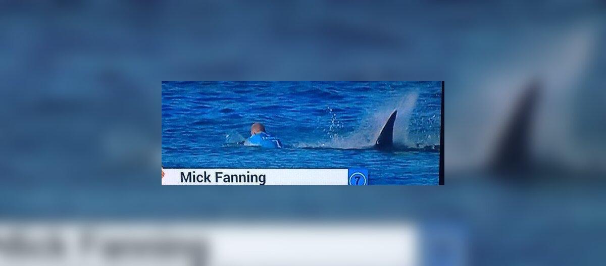 Hirmutav video: üks maailma parimaid surfareid võitleb hai rünnakuga