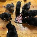 Käpakese korraldatud pidu kasside turvakodus