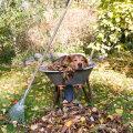 Oktoobris on kõige olulisemad just need aiatööd