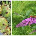 Millised taimed armastavad päikest ja taluvad kuuma?