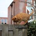 Mida teha, kui kass on kaduma läinud?