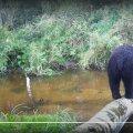 Karu Jõgevamaal