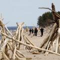 Psühholoog soovitab lähedastel kohtuda ja omavahel rahulikult rääkida - see võib lõpuks päästa vandenõuteooriate uskumisest. Pildil Carnikava rand Lätis, kuhu meri uhus ebatavaliselt aastale kohaselt kaldale ebatavalise hulga ajupuitu. Inimesed tegid neist randa skulptuurid..