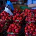 Eesti põldudel valmivad maasikad varem kui Soomes.