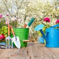 Maikuu aiatööd — millal on õige aeg erinevaid taimi külvata ja istutada?
