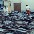 """PROBLEEMNE TEEMA: """"Seaspiracy"""" küsib, mis on selle hind, et meie toidulaual oleks maitsvad kalatooted – aga küsib seda faktidega manipuleeerides ja uurivat ajakirjandust teeseldes."""