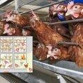Puuris võib olla ühe ruutmeetri kohta 13 kana.