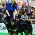 Maailmaränduritest koerad näitusel