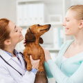 Looduslikud toidulisandid ja puugitõrjevahendid on lemmikloomaomanike seas üha populaarsemad
