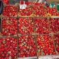 Keskturu maasikad