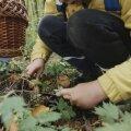 VIDEO | Seeneline, pane tähele! Vaata, milliste nippidega jõuad metsast turvaliselt koju