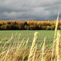 Leili metsalood   Oktoobri maastikud