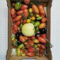 Järelküpsenud tomatid