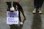 Euroopa Liitu jääda soovivad šotlased on valmis vastu võtma kõik inglise europooldajad, nii inimesed kui ka koerad.