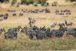 Safari-firmad vangerdavad Aafrikast raha minema