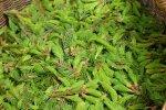 INTERVJUU: Taimetark Metsamoor: Toidulisandite asemel sööge Eestis kasvanud tatart, talukana mune ja mett