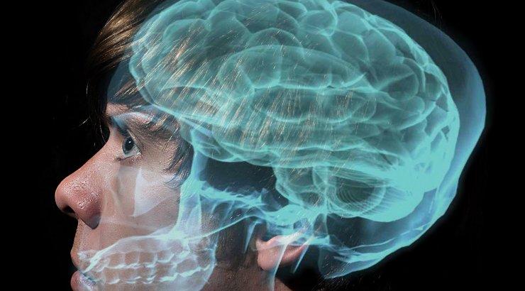 Üllatus, üllatus – hiirte ja inimeste aju on erinev