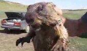VIDEO: Esmaspäeva võiks just sellise karjega alustada