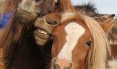 GALERII: Loomad, kes on teinud endast üliägeda selfie