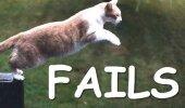 Ka kassid eksivad ja kukuvad