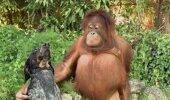 VIDEO | Tõeline sõprus liidab ka kõige erinevamad loomaliigid!