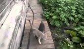 Marukihvt! Koer tassib laisa kassi seljas koju