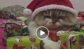 Lõbustav VIDEO: Vaata, see kass on küll kõige ahnem päkapikk, keda sa näinud oled
