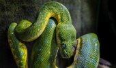ÜLINALJAKAS VIDEO | Vaata, kuidas tembutaja inimesi maoga ehmatab
