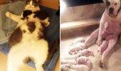 GALERII: Loomade humoorikad, räsitud näoilmed paljastavad, kui keeruline on lapsevanema roll