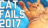 HITTVIDEO: Naerutavad kassid ja nende koomilised ebaõnnestumised teevad päeva heaks