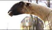 VIDEO: Uskumatult naljaks, loomad teevad päriselt inimese häält