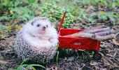 Vahva GALERII | Jaapani siilipoiss Azuki peab lustakat piknikku