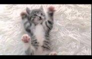 ВИДЕО: Милые котята, которые заставят ваше сердце растаять