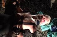 Ekstreemne rattasõit Neitsisaartel: Richard Branson sõitis end katki
