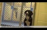 VIDEO: Nädalaid varjupaigas kurvastanud koera tunded keevad üle, kui talle viimaks järele tullakse