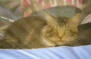 Выставка кошек 18 - 19.02.2017. Фото автора